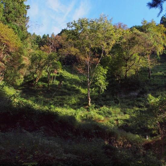 小倉山は前回訪れた6月と異なり、夏の激しさをやり過ごし、どこか落ち着いた表情で迎えてくれた