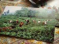 紅茶専門店 ディンブラ