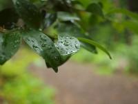 雨のはっぱ2