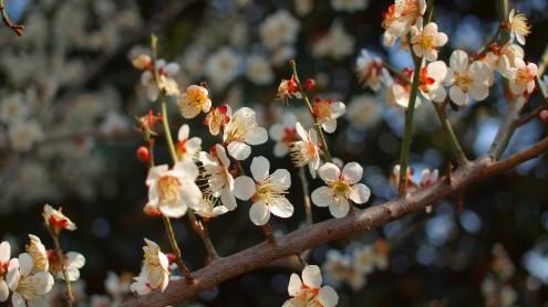 咲きすぎれば風情も何も(^O^)