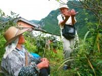 高知の旅…釜炒り茶のお話し
