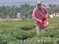張富欽使用有機肥料