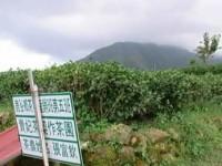 打開一片天。地震が生んだ台湾の有機茶
