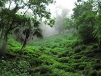 土地の記憶……お茶とテロワール